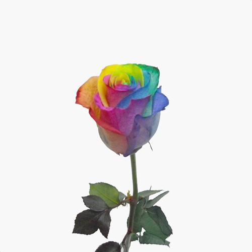 fleuriste pas cher livraison fleurs longueuil brossard. Black Bedroom Furniture Sets. Home Design Ideas